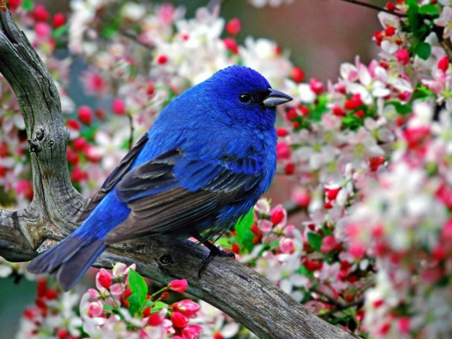 Blue_Bird - Blue_Bird - , Blue_Bird - Play puzzles with Blue_Bird or send Blue_Bird puzzle ecards to your friends </td><td valign=