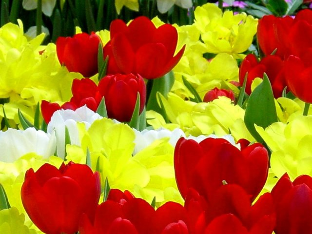 Flowers_3 - &nbsp; - , Flowers_3 - Play puzzles with Flowers_3 or send Flowers_3 puzzle ecards to your friends </td><td valign=