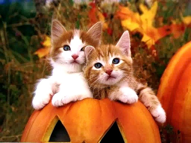 Halloween Cute Kittens - Puzzles Gallery