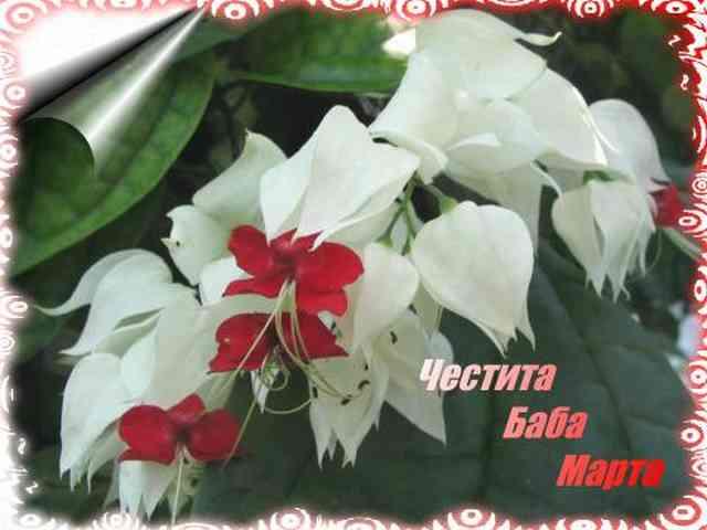 Baba marta puzzles gallery baba marta baba marta baba marta greeting greetings spring m4hsunfo