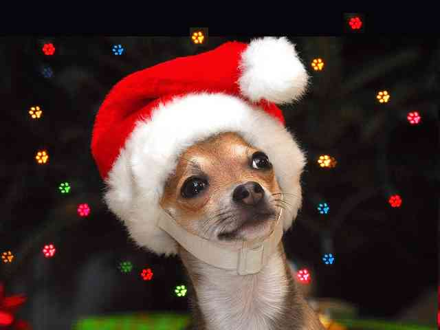 Pets Santa Claus - Your Pets Santa Claus ... - , Santa, Claus, christmas, greeting, greetings, ecard, ecards, holidays, animals, dog - Play puzzles with Pets Santa Claus or send Pets Santa Claus puzzle ecards to your friends </td><td valign=