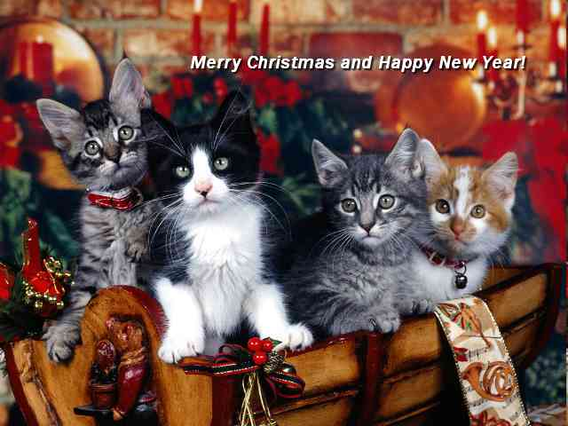 Christmas Cats - Four nice Cats wishing you Merry Christmas - , cats, christmas, greeting, greetings, ecard, ecards, holidays - Play puzzles with Christmas Cats or send Christmas Cats puzzle ecards to your friends </td><td valign=